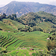 Paddy fields landscpae in Hoang Su Phi District, Vietnam, Southeast Asia
