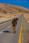 Israel-Negev Desert