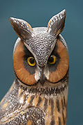 """""""Long Eared Owl pair, 1975."""" Bird carving by Wendell Gilley"""