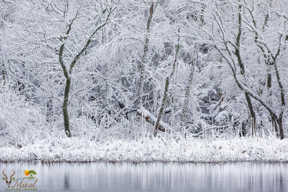 Rare snowfall on pond in Coastal, SC