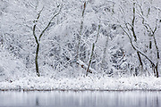 Rare snowfall on pond in Coastal, SC