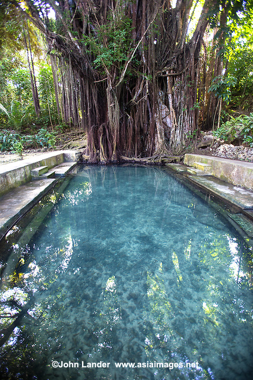 A 400 year old balete tree in  Lazi, Siquijor is unusual in that the spring that emanates from the base of the tree then flows straight into a pool. The Balete tree is from the  Ficus family (or strangler figs) that grow hanging roots that eventually  encircle and suffocate the host tree.   In some areas of the Philippines people believe that balete trees are dwelling places for supernatural beings.