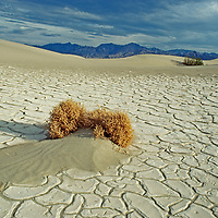 Hardy shrubs survive in the sand dunes in Death Valley National Park.