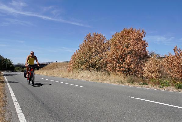 Nederland, The Netherlands, Dieren, 7-8-2018Door de aanhoudende droogte en hitte heeft de natuur het moeilijk.  Bomen verdorren en sterven af . Blad van bomen hangt omlaag of vergeeld . Bij Dieren fietst een man langs een bossage die aan het afsterven is .Foto: Flip Franssen