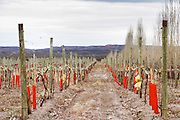 View of the vineyard and soil Bodega Del Anelo Winery, also called Finca Roja, Anelo Region, Neuquen, Patagonia, Argentina, South America