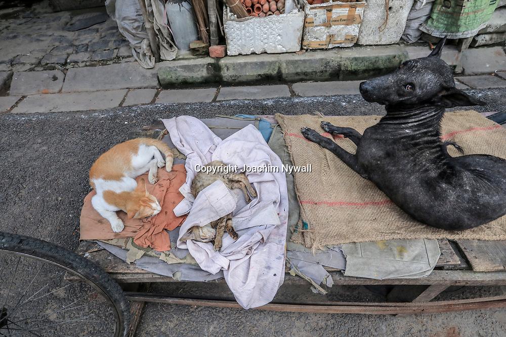 20171028 Kolkata Calcutta Indien<br /> Kumartuli<br /> Stadsdelen där man gör alla skulpturer och statyer till festivaler och tempel<br /> Otroligt duktiga hantverkare och konstnärer<br /> Ett par sovande katter och en svart hund<br /> ----<br /> FOTO : JOACHIM NYWALL KOD 0708840825_1<br /> COPYRIGHT JOACHIM NYWALL<br /> <br /> ***BETALBILD***<br /> Redovisas till <br /> NYWALL MEDIA AB<br /> Strandgatan 30<br /> 461 31 Trollhättan<br /> Prislista enl BLF , om inget annat avtalas.