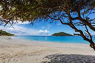 Tree by the beach in Skoples island