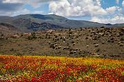 Road to Goris, Armenia. May 3, 2015