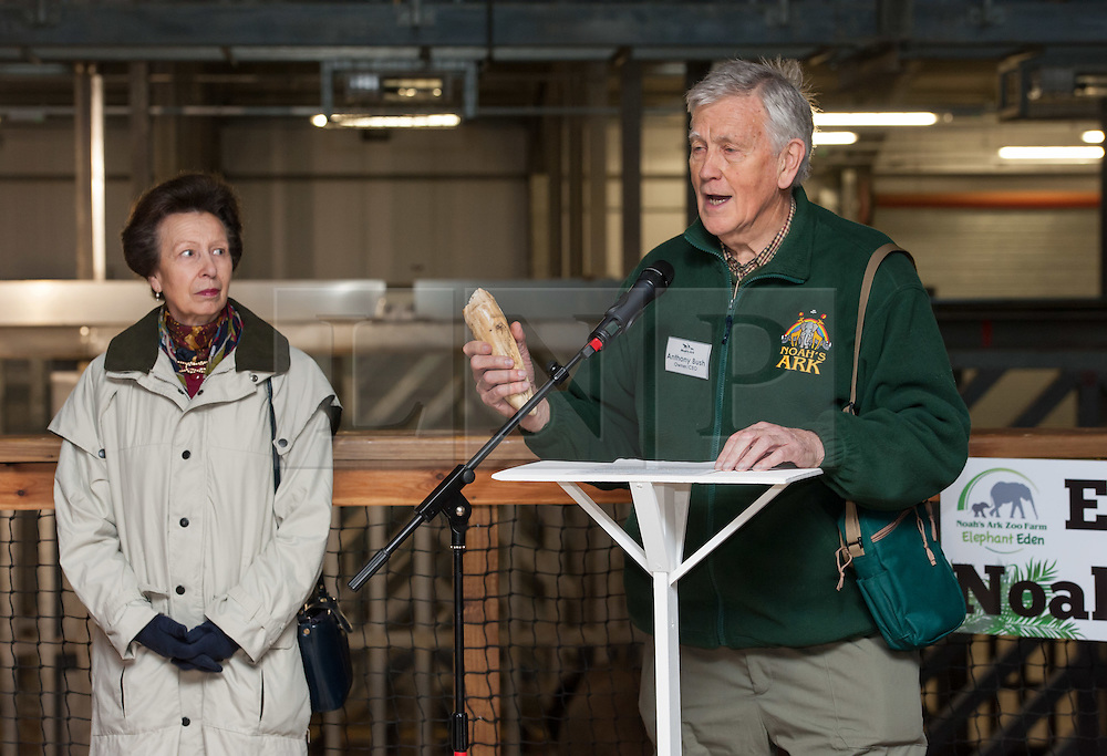 """© Licensed to London News Pictures. 17/12/2015. Wraxall, North Somerset, UK.  The Princess Royal, PRINCESS ANNE, pictured with Anthony Bush the founder of Noah's Ark Zoo Farm holding an elephant tusk that fell off elephant Janu, opens 'Elephant Eden' and elephant play zone at Noah's Ark Zoo Farm in Bristol. HRH The Princess Royal officially opened the 20 acre Elephant Eden habitat – the largest of its kind in northern Europe. Described as a """"five star hotel for elephants"""" by international elephant management specialist Alan Roocroft, Elephant Eden saw the arrival of its first African elephant in 2014 and has had finishing touches to the complex completed this year along with the arrival of further elephants. Now home to two characterful bull elephants Janu and M'Changa, Elephant Eden has been celebrated as offering welfare improvements to the industry and has been used as a helpful model for other collections to base their own building plans on, including international zoo colleagues from as far afield as Japan.<br />  Noah's Ark will also unveil its new Elephant Play Zone for children next to the elephant barn, which will include an impressive 4m high scale model elephant with built-in slide.<br /> Photo credit : Simon Chapman/LNP"""