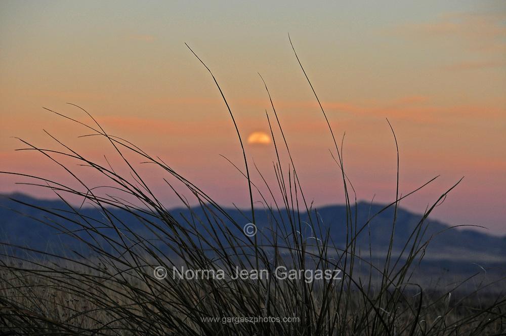 Grasslands cover the foothills of the Santa Rita Mountains north of Sonoita, Arziona, USA, in the Sonoran Desert.