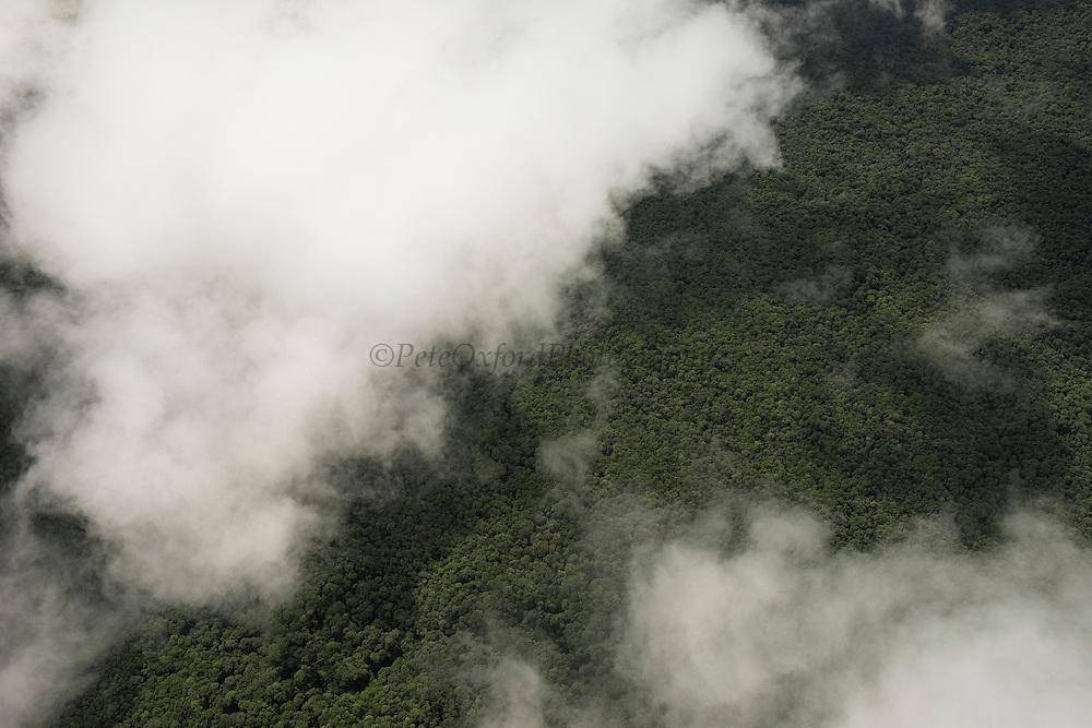 Rainforest Canopy<br /> Phillipai<br /> GUYANA<br /> South America