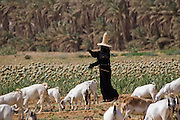 A woman dressed in a black abaya and shielded from the sun in a wide-brimmed straw hat called a nakhl, herds goats near Shibam on the edge of the Arabian Peninsula's Rub al Khali, or Empty Quarter. This section of desert holds the world's largest stretch of sand. Hadhramawt, Yemen.