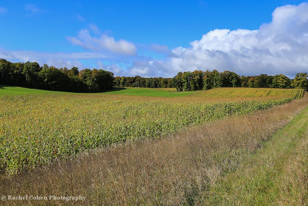 """Traverse city Farmfield""<br /> <br /> Beautiful corn fields and farm land outside of Traverse City Michigan!"