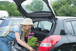 Mature woman loading flower plant in a car trunk, Augsburg, Bavaria, Germany