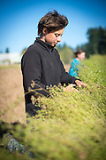 Female farm worker.