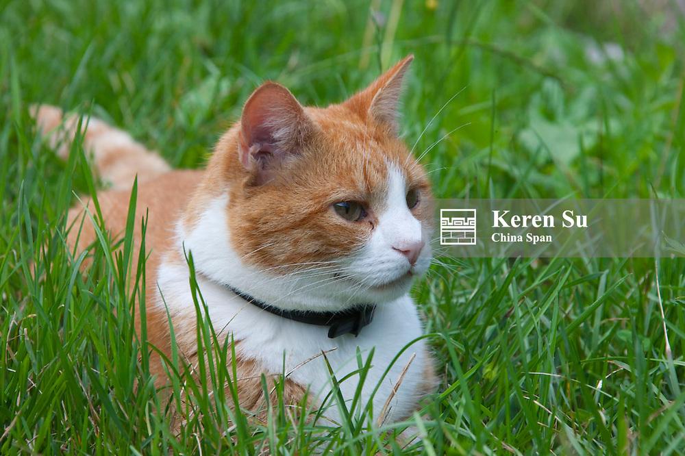 Cat in the grass, Postojna, Slovenia