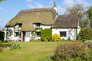 Pretty thatched whitewashed country cottage, Cherhill, Wiltshire, England, UK