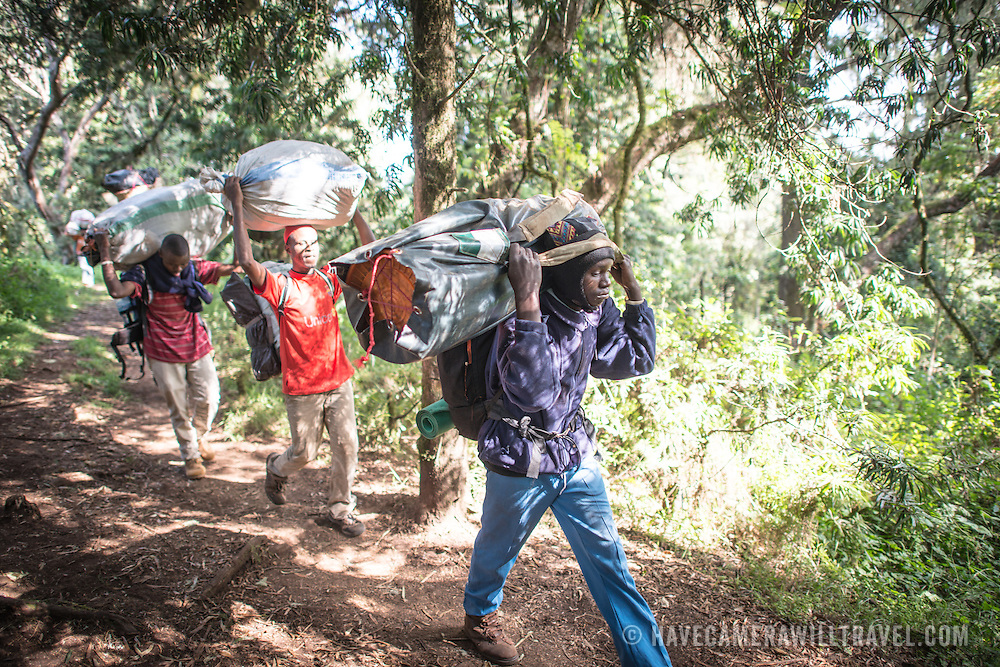Porters carry their loads on the path between Big Tree Camp and Shira 1 Camp on Mt. Kilimanjaro, at the top of the forest zone.