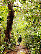 A guide walking through a jungle path on the island reserve of Nosy Mangabe, Madagascar