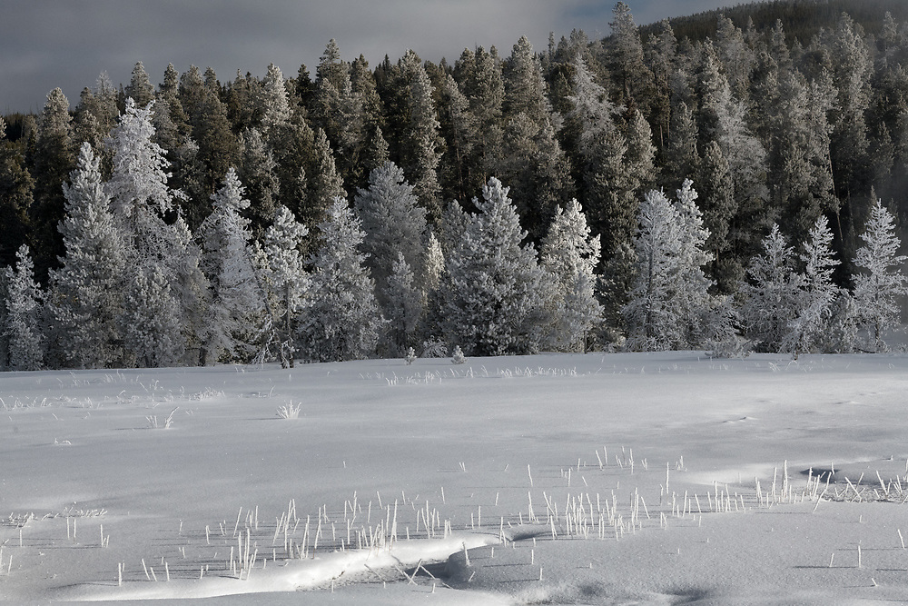 A winter scene in Yellowstone