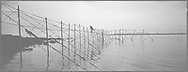A salmon netter climbing along the newly-constructed fly net on the rocks at Boddin, Angus. The net takes a team of six men around two days to complete each spring, as the poles can only be driven into holes in the foreshore at low tide.<br /> Ref. Catching the Tide 27/00/04a (6th May 2000)<br /> <br /> The once-thriving Scottish salmon netting industry fell into decline in the 1970s and 1980s when the numbers of fish caught reduced due to environmental and economic reasons. In 2016, a three-year ban was imposed by the Scottish Government on the advice of scientists to try to boost dwindling stocks which anglers and conservationists blamed on netsmen.