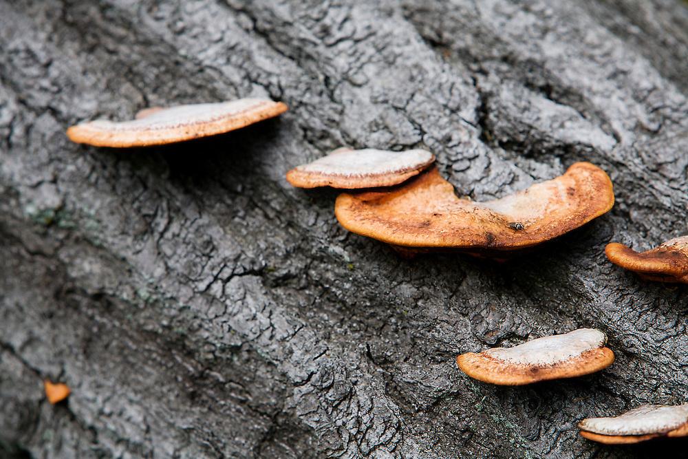 A Bracket Fungi