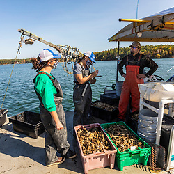 The Nature Conservancy's Alix Laferriere (left) and Brianna Group  inspect and count oysters with Steve Weglarz (Cedar Point Oyster Company) as part of the Supporting Oyster Aquaculture and Restoration (SOAR) program on the shores of Great Bay in Durham, New Hampshire.
