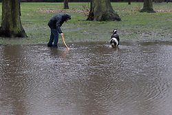 © Licensed to London News Pictures. 30/01/2021. London, UK. A dog walker searches for a ball in a large puddle in Greenwich Park. Yellow weather warnings for rain and snow are in place in parts of the UK. Photo credit: George Cracknell Wright/LNP