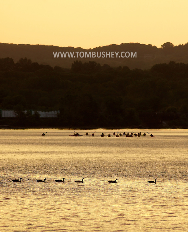 Cornwall-on-Hudson, New York - Canada geese and a group of kayakers paddle in the Hudson River at sunset on June 15, 2011.