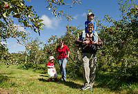 A family enjoys a Sunday afternoon apple picking adventure at Smith Orchard in Belmont.  (Karen Bobotas Photographer)