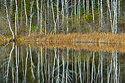 Tree reflection in Long Lake<br />Longlac<br />Ontario<br />Canada