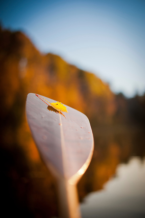 Canoeing during fall autumn along the Indian River National Wild and Scenic River of the Hiawatha National Forest in Michigan.