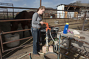 """CREDIT: Steven St. John for The Wall Street Journal<br /> """"ANIMAS<br /> <br /> Brian Dils 17-year-old daughter Saige turns on water for the horses on the family land in Aztec New Mexico on Tuesday March 23, 2016."""