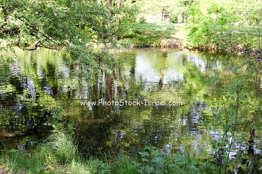 Trees around a water pond