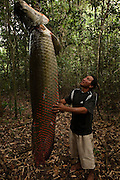 Arapaima (Arapaima gigas) fishing. Sustainable harvest on quota<br />
