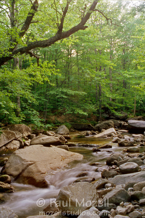 A stream in the White Mountain National Forest, New Hampshire