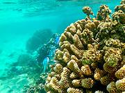 Motu Vaiorea, Huahine, Society Islands, French Polynesia; South Pacific