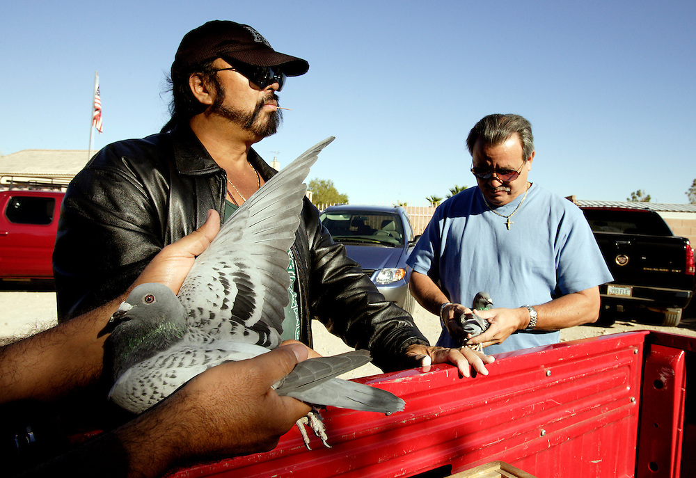 LAS VEGAS, NEVADA, November 12, 2007: Contestants from around the world gathered in Las Vegas, Nevada on November 12, 2007 to race their pigeons in the Las Vegas Classic. Side deals and pigeon sales are made in the dirt parking lot as Eddie Tongonan, left, of the Hawaiian based Lau' Lea loft, decides which bird to buy.