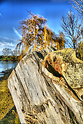 An old tree trunk captures the winter sun in Wicksteed Park