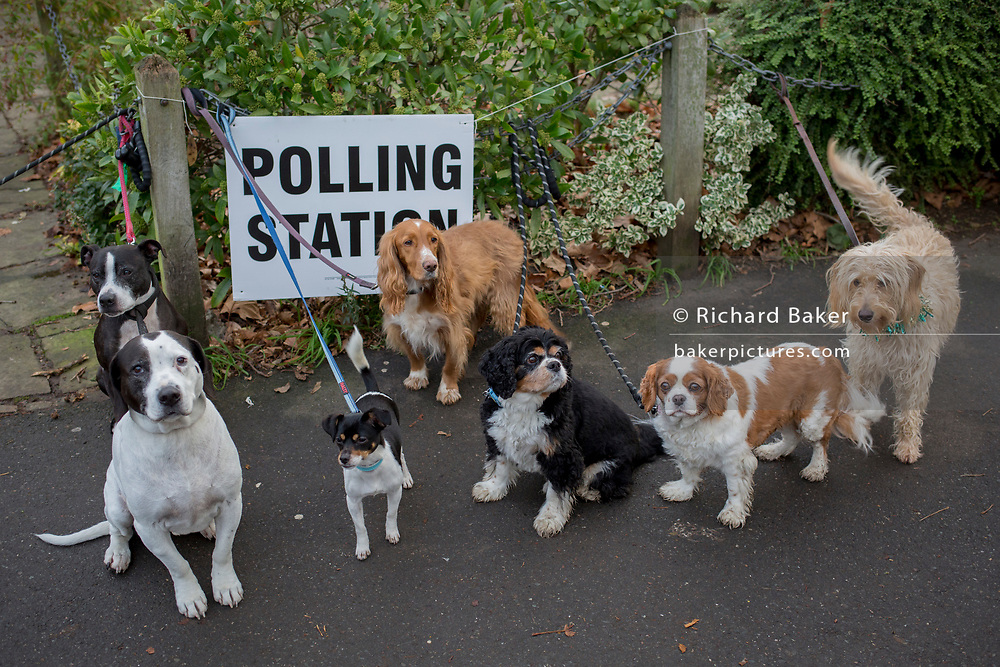 Pet dog owners gather their assorted breeds for an Instagram post on the Dulwich Village Insta feed, outside St. Barnabas community hall in Dulwich Village in the south London borough of Southwark, serving as a polling station for the UK's General Election 2 weeks before Christmas, on 12th December 2019, in London, England.