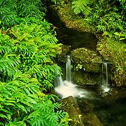 Akaka Falls State Park on the Big Island of Hawaii