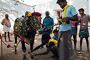 In Palamadu the temple bull is anointed before been taken around the village to be blessed.