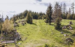 THEMENBILD - eine Bergwiese mit Nadelbäumen und einem schmalen Pfad, aufgenommen am 22. Mai 2020 in St. Veit im Pongau, Oesterreich // a mountain meadow with pine trees and a narrow path, in St. Veit im Pongau, Austria on 2020/05/22. EXPA Pictures © 2020, PhotoCredit: EXPA/Stefanie Oberhauser
