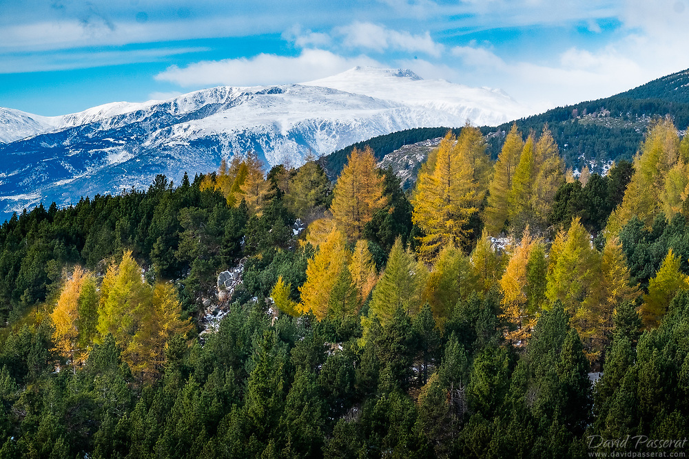 Trees on a hill with snowy peaks