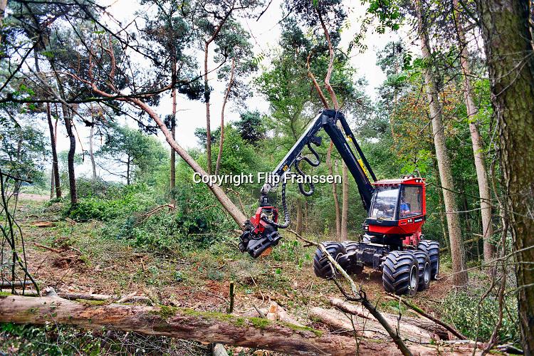 Nederland, Groesbeek, 03-2019 Afgelopen weken zijn er in de bossen rond Groesbeek en Mook veel bomen gekapt . Staatsbosbeheer noemt dit oogsten van hout noodzakelijk om de biodiversiteit in de bossen te herstellen en ruimte te geven voor andere soorten flora en fauna, planten en dieren, om te floreren. Foto: Flip Franssen