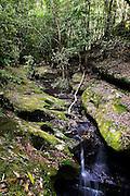 Mountain Stream, Watagan Mountains, Australia