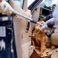 042415       Cable Hoover<br /> <br /> Two dogs are dragged out of broken-down SUV during an inter-agency roundup of dogs at a private residence in Candy Kitchen Friday.