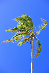 July 21, 2019 - Palm Tree Against Clear Blue Sky (Credit Image: © Carson Ganci/Design Pics via ZUMA Wire)