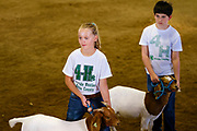 16 JULY 2020 - BOONE, IOWA: MADDIE MOWRER, left, and JOSE ZAVALA in the show ring during meat goat judging on the first day of the Boone County Fair in Boone. Summer is county fair season in Iowa. Most of Iowa's 99 counties host their county fairs before the Iowa State Fair. In 2020, because of the COVID-19 (Coronavirus) pandemic, many county fairs were cancelled, and most of the other county fairs were scaled back to concentrate on 4H livestock judging. Boone county scaled back its fair this year. The Iowa State Fair was cancelled completely. Boone County Emergency Management did not approve going ahead with the fair, and has advised anyone who goes to the fair to take precautions and monitor themselves for symptoms of the Coronavirus.            PHOTO BY JACK KURTZ