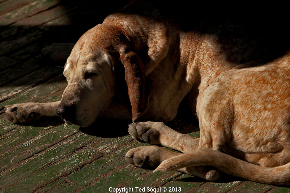 Winter in New Mexico..A hound dog sleeping on a porch in Madrid, New Mexico..